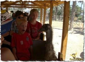 avestruz fobia