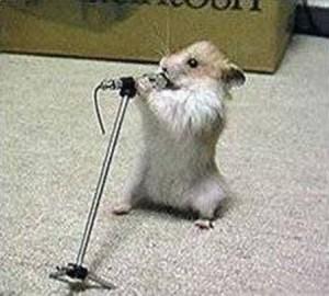 zuando os animais - mouse idols