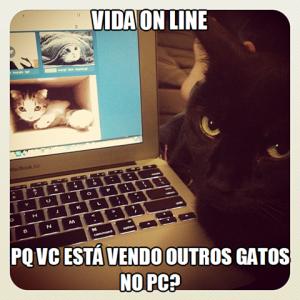 Pq vc está vendo outros gatos no pc?